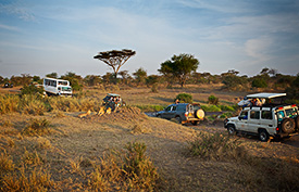 AdventurAfrica-Serengeti-TrafficJam